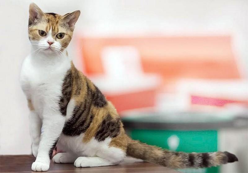Самые необычные породы кошек в мире