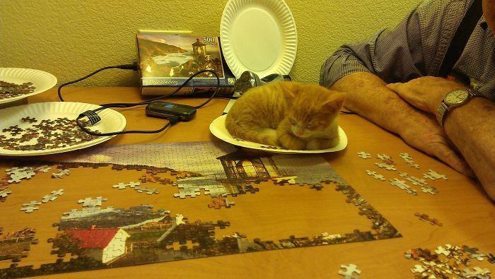 Котики тоже любят собирать пазлы