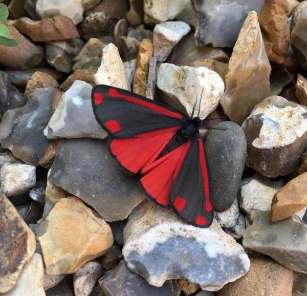 Удивительные снимки и интересные факты о природе