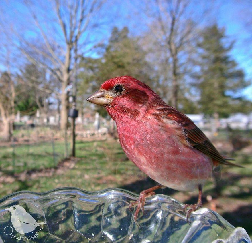 Кормушка с камерой позволяет делать невероятные снимки птиц и животных
