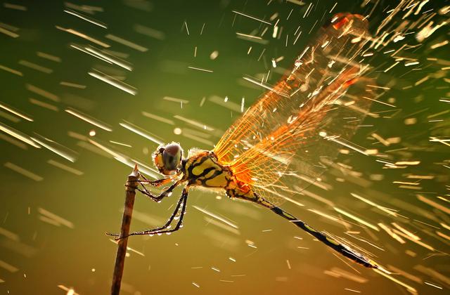 Почему дождевые капли не убивают насекомых?