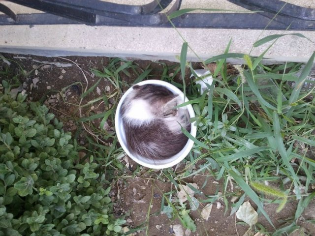 Котики, которые отключились в разных местах и позах
