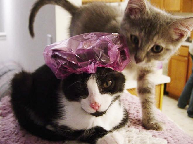 Милые котики в шапочках для душа