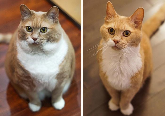 Пухлые и неповоротливые котики, которым удалось похудеть
