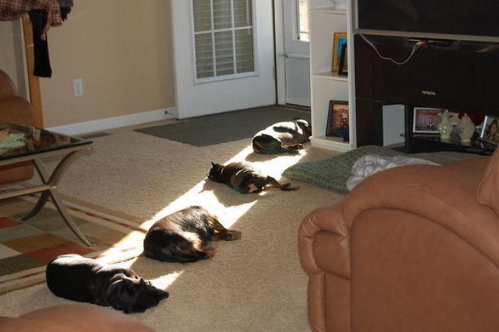 Домашние питомцы, которые перезаряжают свои солнечные батареи