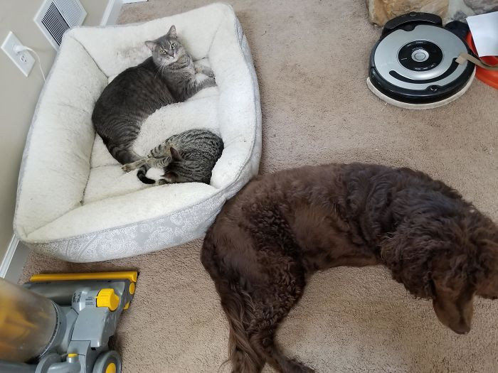 Котики продолжают захватывать лежаки собак