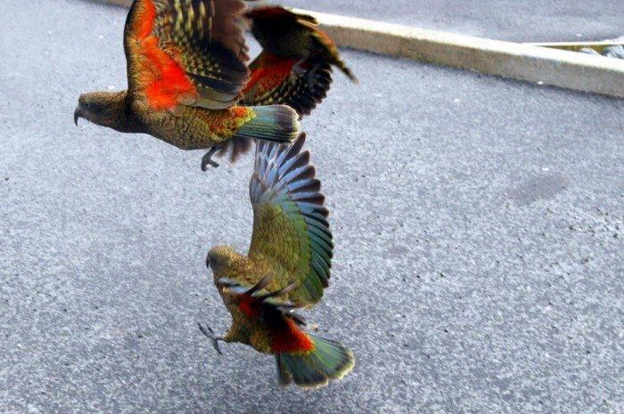 Животные с необычным окрасом, которым наградила их природа