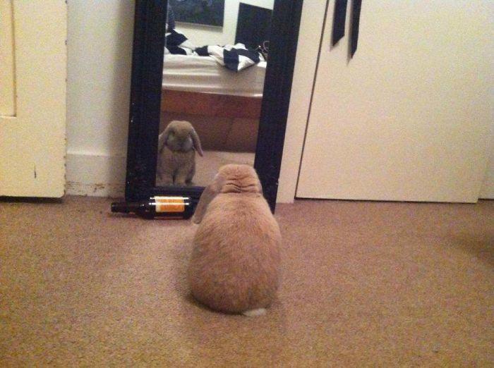 Домашние питомцы тоже смотрят на себя в зеркало
