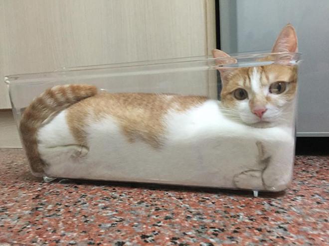 Котики растаяли от жары