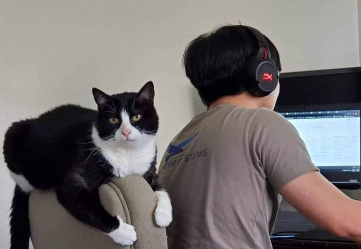 Работа из дома и домашние животные