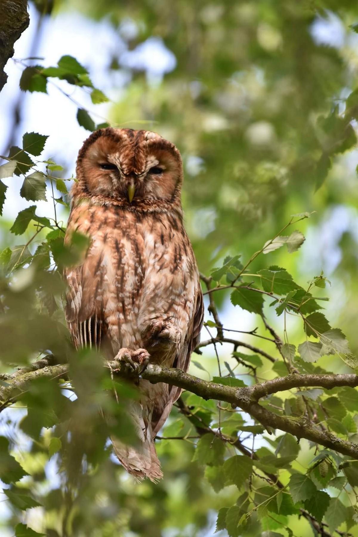 Фотографии британской природы, сделанные во время локдауна