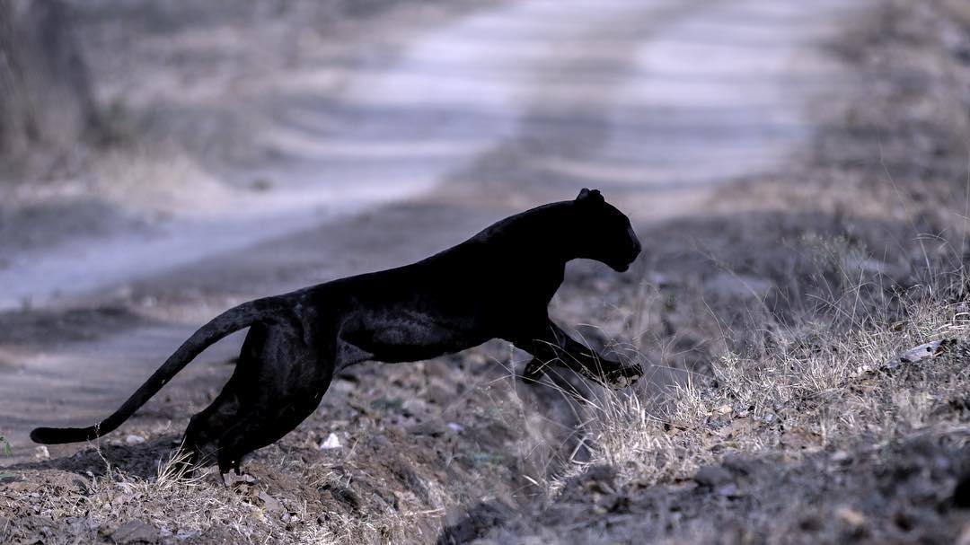 Дикие животные в объективе Кетана Хамбатта