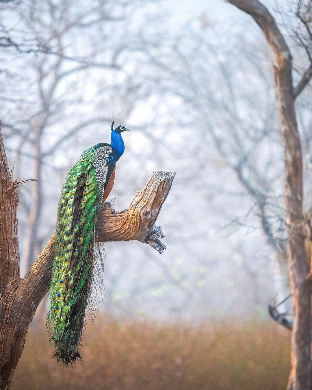 Птицы и животные в естественной среде обитания от Варуна Адитья