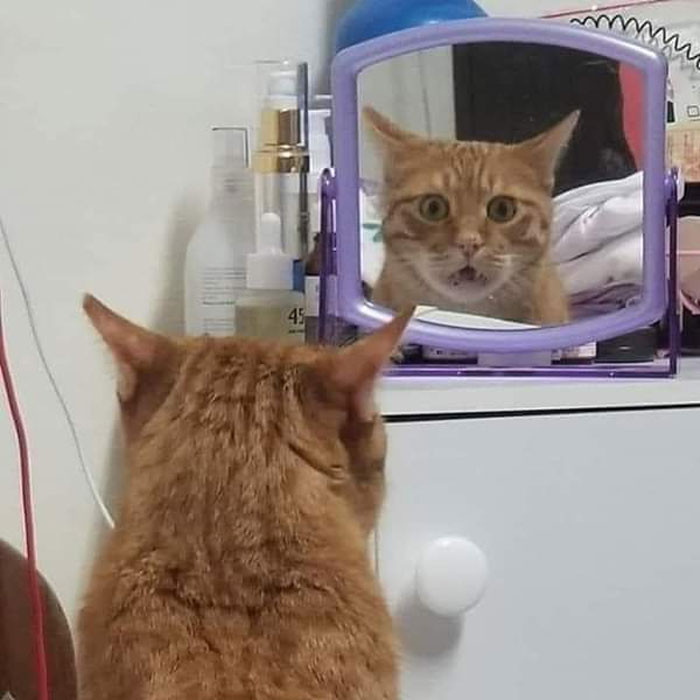 Владельцы застали своих питомцев у зеркала