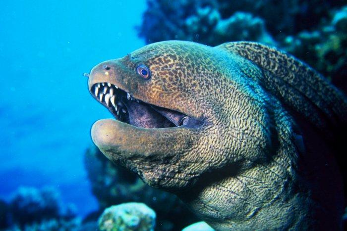 7 опасных рыб, которые способны убить человека