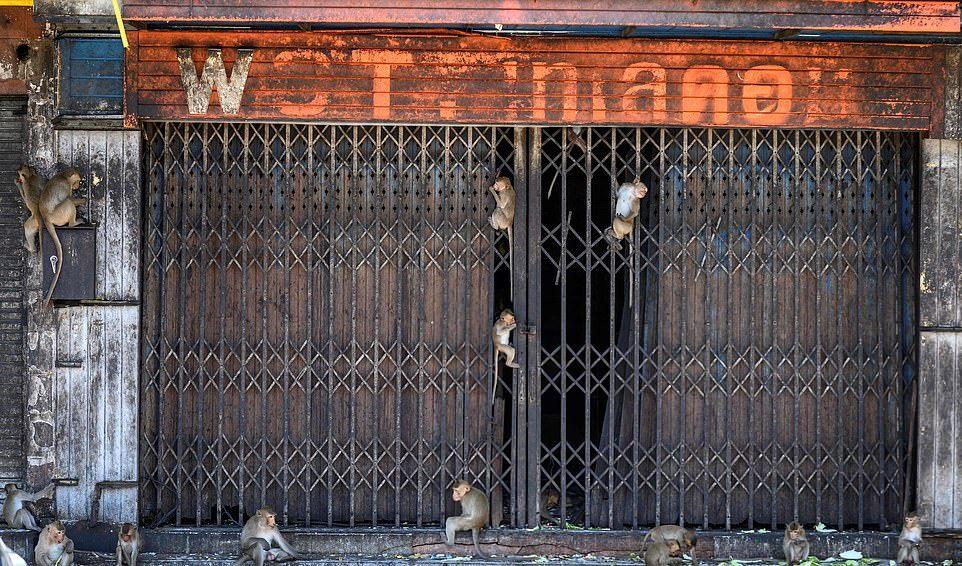 Агрессивные макаки терроризируют жителей тайского города