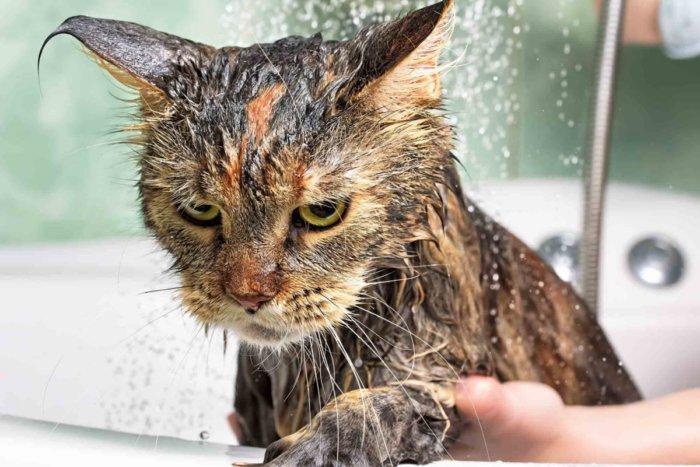 Почему котики боятся купаться?