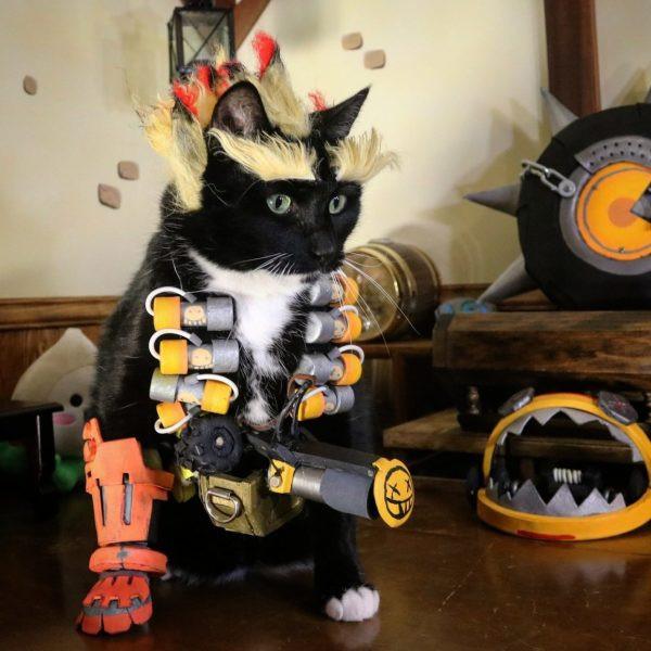 Примеры очаровательного кошачьего косплея