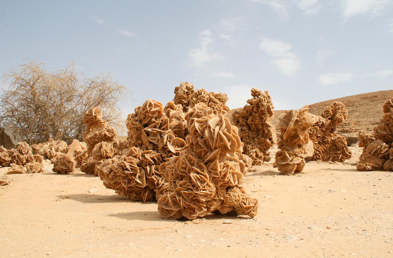 Удивительные находки и жители пустынь