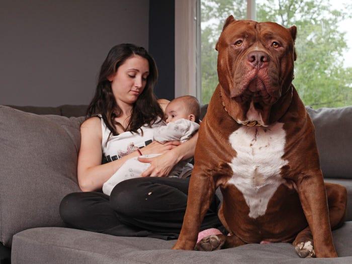 Почему домашние животные полезны для вас и вашей семьи