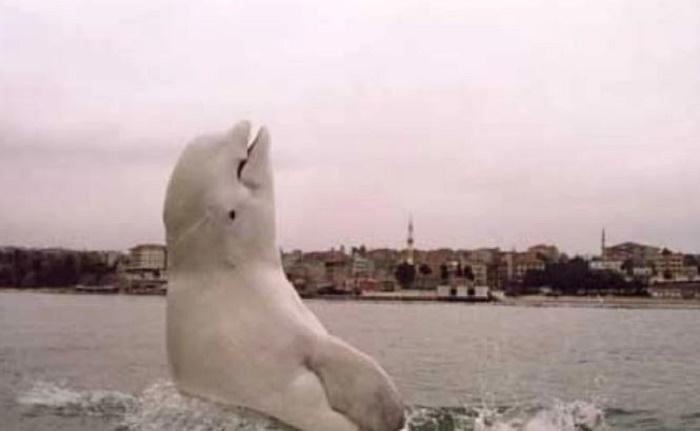 Существовали ли боевые дельфины в СССР на самом деле