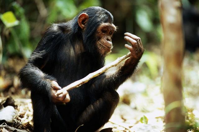 Интересные факты о животных, которые вас удивят