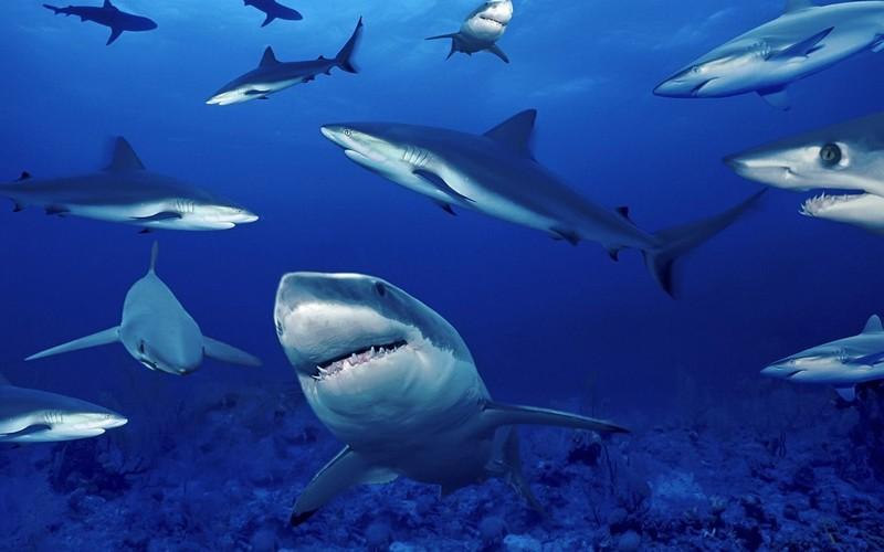 Самые страшные и опасные среди акул (ФОТО)