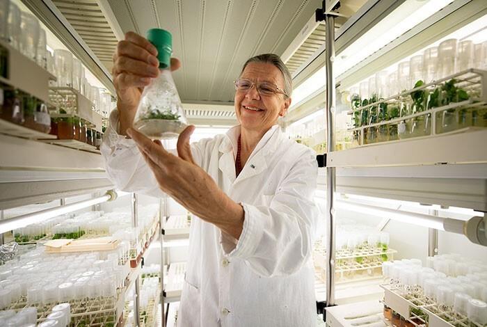 Ученые прорастили семена, которым уже 32000 лет