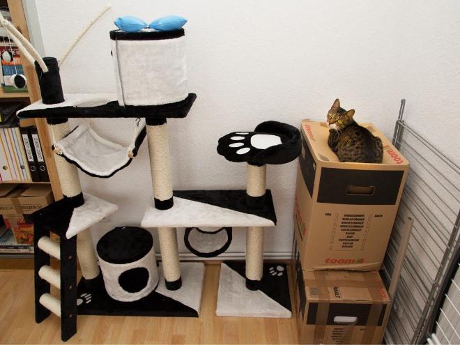 Как кошки игнорируют подаренные им подарки (ФОТО)
