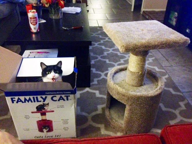 Как кошки игнорируют подаренные им подарки