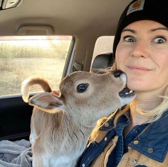 Милые снимки с коровами, которые легко завоюют ваше сердце