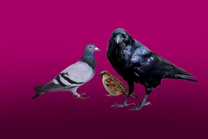 Где спят ночью голуби, воробьи и вороны? (ФОТО)
