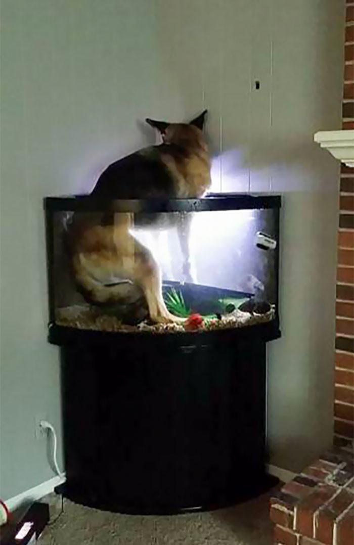 Животные, которые попали в странные и неловкие ситуации