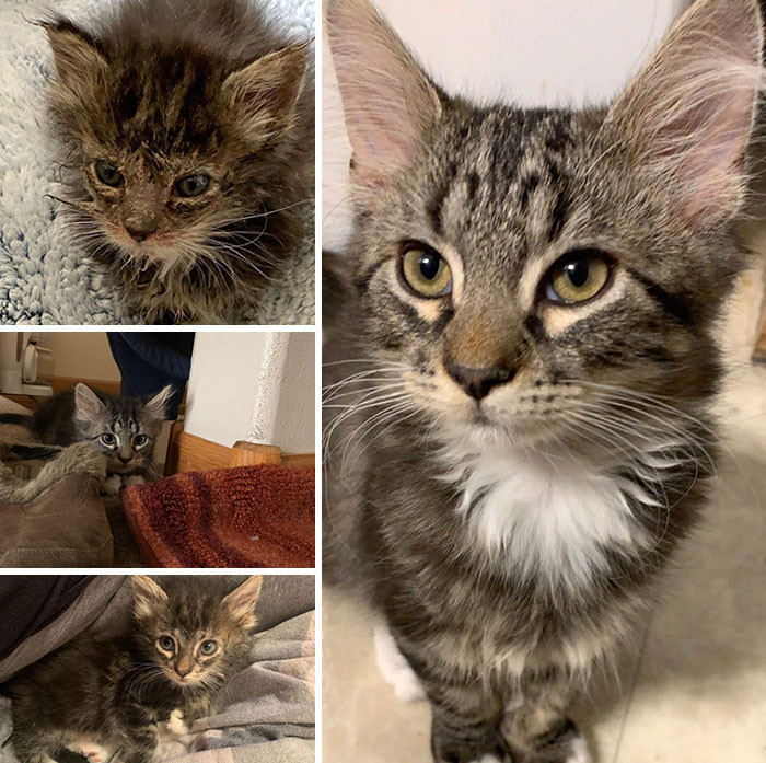 Милые котики до и после того, как их спасли от бездомной жизни (ФОТО)