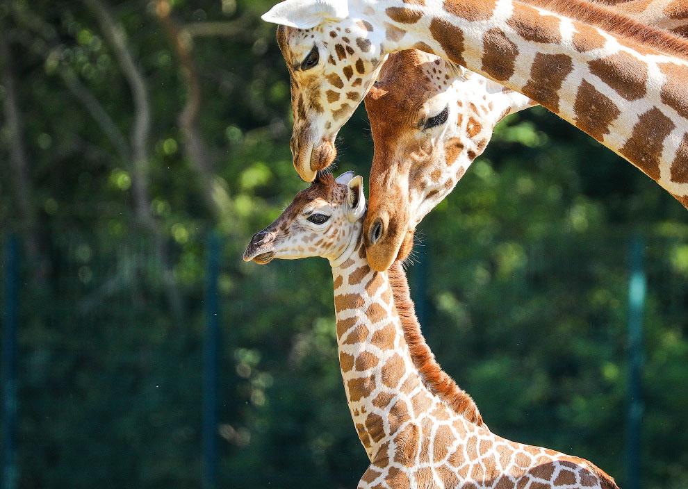 Жизнь животных на фотографиях  (ФОТО)