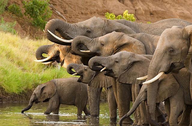 Мифы и факты о жизни слонов: почему они боятся мышей