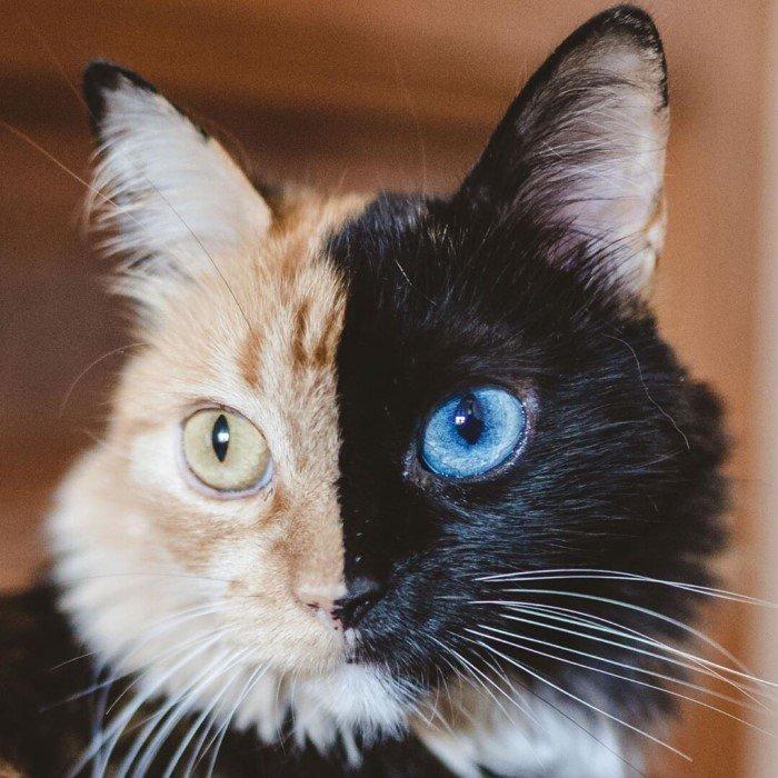 Котики и пёсики с уникальным окрасом от природы