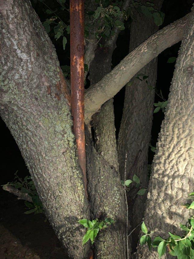 Природа и деревья, которые готовы поглотить всё вокруг