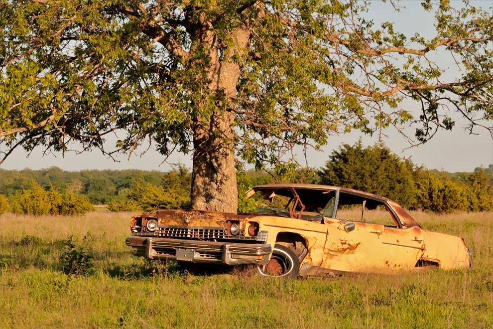 Удивительные деревья, которые растут прямо из заброшенных автомобилей