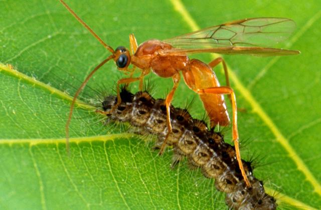 Удивительные земные организмы, способные выживать в экстремальных условиях