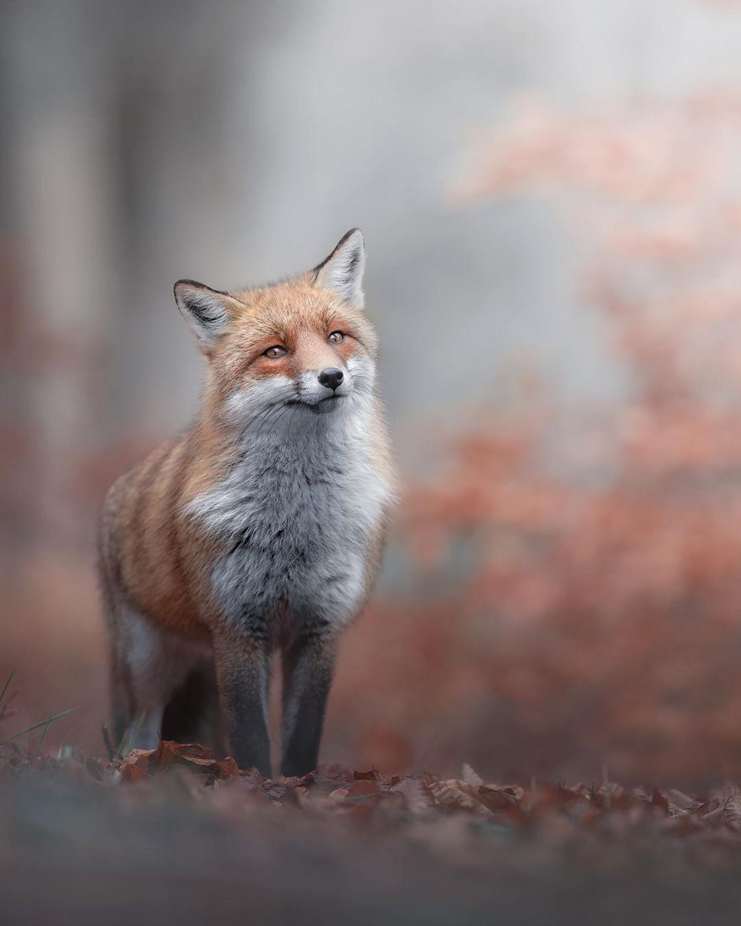 Дикие животные и птицы на снимках Микеле Бавассано