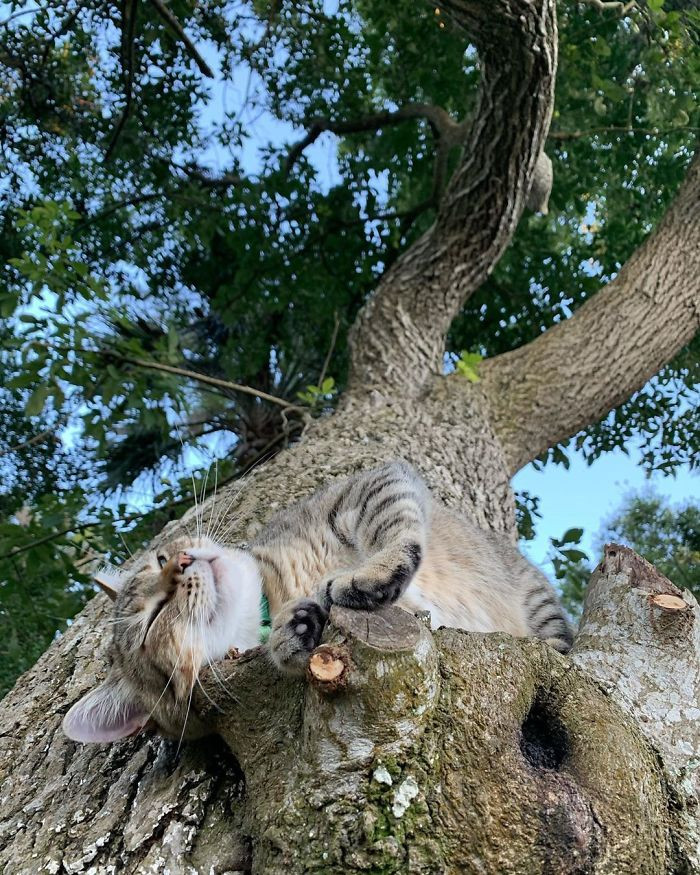 Эти котики в совершенстве овладели искусством спать на деревьях