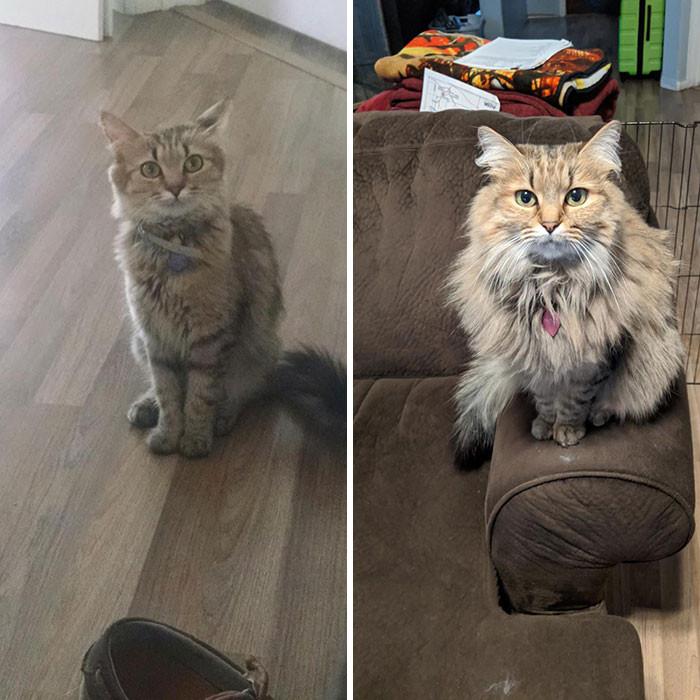 Милые котики до и после того, как их спасли от бездомной жизни