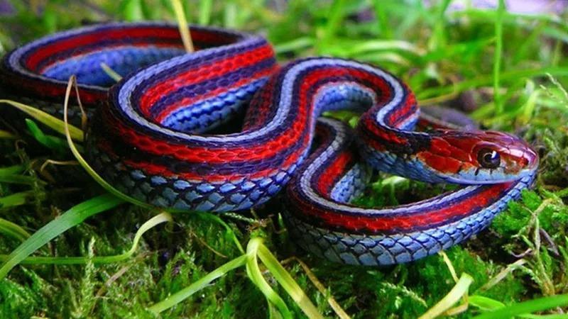 Необычные сексуальные ритуалы у животных