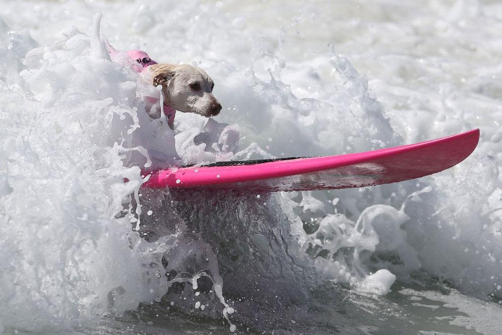 Эти пёсики покажут, как правильно плескаться в воде