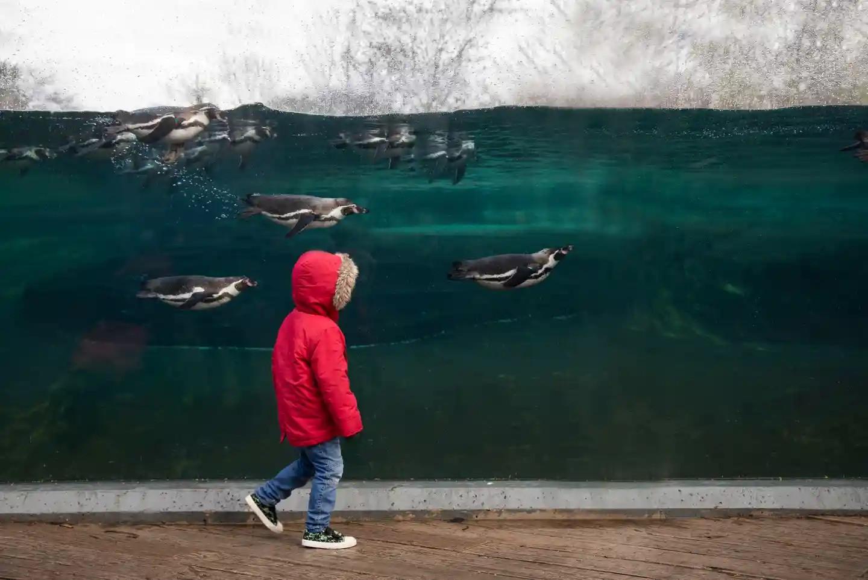 Победители фотоконкурса ассоциации зоопарков и аквариумов BIAZA-2020