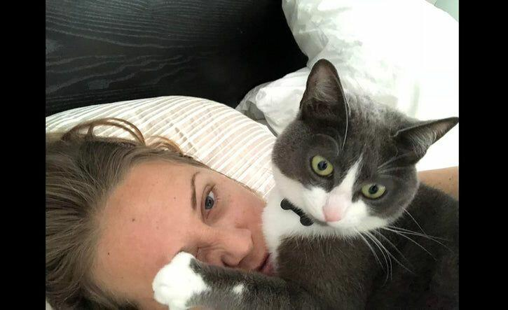 Шкодливые и наглые котики, от которых не стоит ждать ничего хорошего
