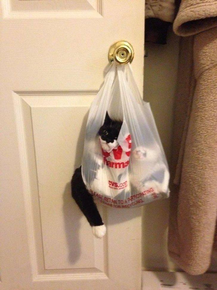Котики, которые везде могут устроится с максимальным комфортом