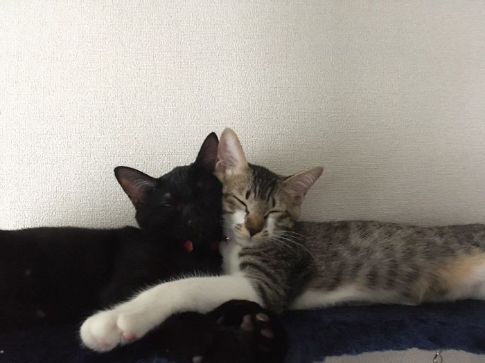 Котики уснули в необычных позах и сформировали причудливые фигуры