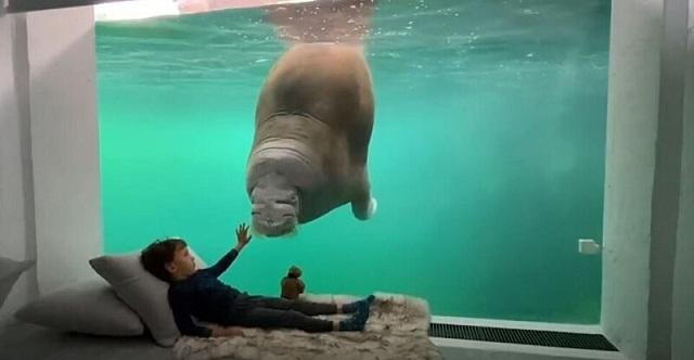 В бельгийском зоопарке можно снять номер с видом на диких животных